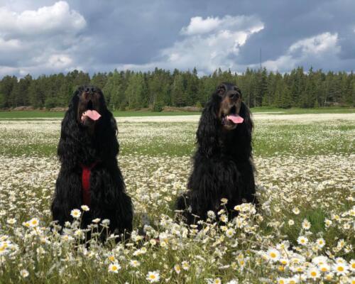 Nikki och Natasha 200607 I blomsterhavet.